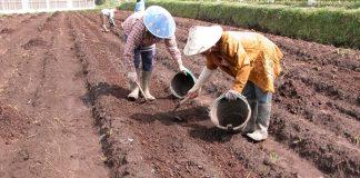 menetralkan pH tanah