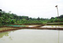 kolam tanah