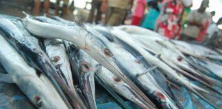 manfaat ikan cucut