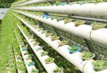inovasi di bidang pertanian