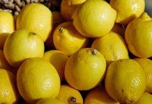 stok lemon