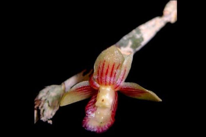 spesies tumbuhan unik