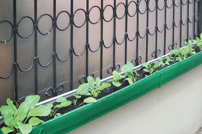 taman sayuran