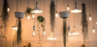 tanaman hias yang digantung