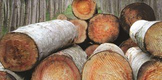 panen kayu jabon