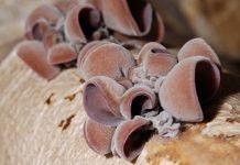camilan jamur