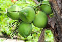 limbah kelapa