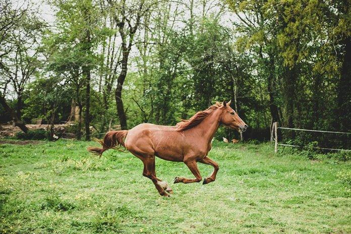 kuda senang