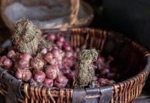 hama bawang merah