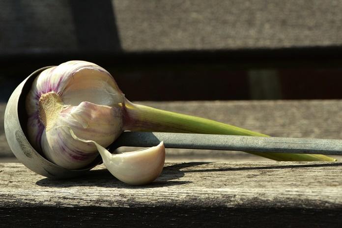 benih bawang putih