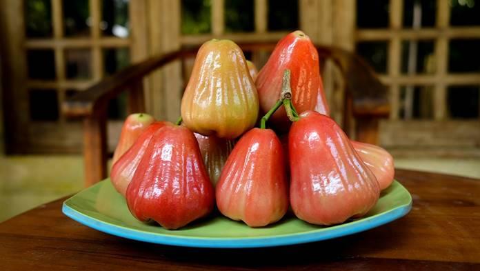 jambu air king rose apple