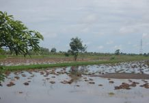 budidaya di lahan rawa