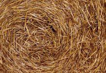 jerami padi