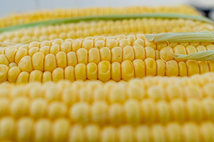 stok jagung nasional