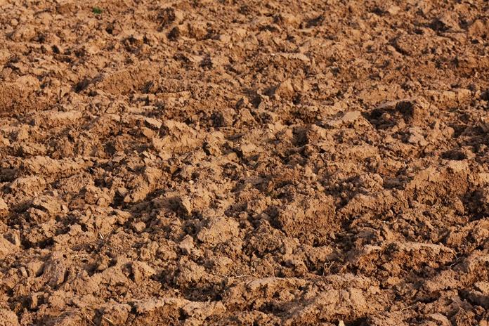 tanah asam