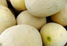 jenis melon